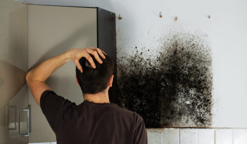 mold in homes